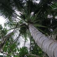 A Writing Retreat in Hawaii